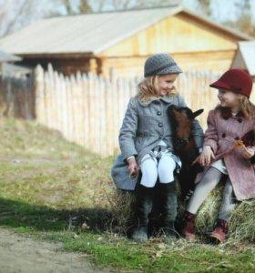 Племенные чешские козлы вашей мечты