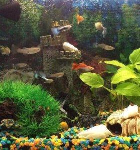 Аквариум с рыбками и всем необходимым