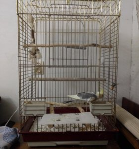 Клетка для попугая средней или крупной породы.