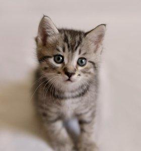 Очаровательные котята ищут хозяев