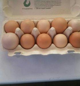 Продам куриные яйца