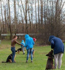 Передержка и дрессировка собак в Курск