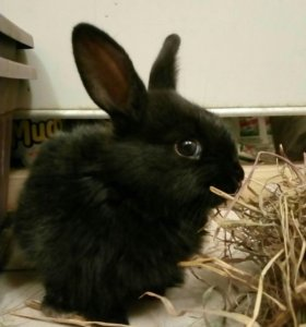 Очаровательные крольчатки-шиншиллятки!🐰😉