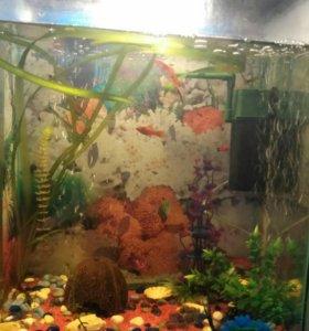 Продам аквариум со всем содержимым