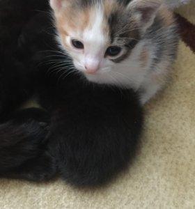 Котята мальчик и девочка