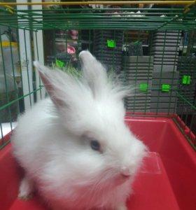 Срочно! Продам декоративного крольчонка мальчик !