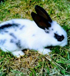 Крольчата, кролики