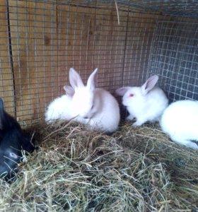 Кролики (2 мес)