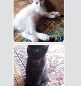 Продам котёнка,любого)