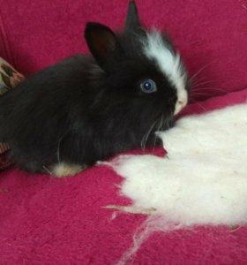 Декоративные крольчата 🐰🐇