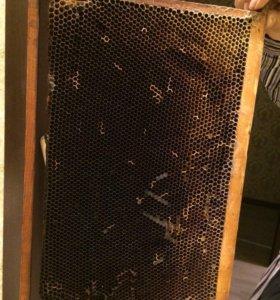 Сушь для пчёл