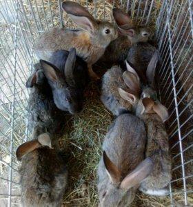 Кролики.крольчата.самки.самцы.
