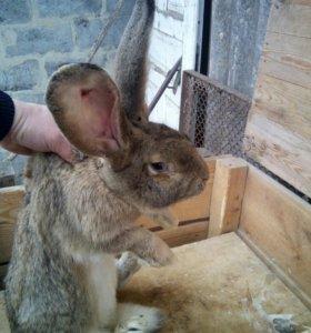 Обмен кроликов на других животных.