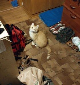Рыжий котик ищет дом
