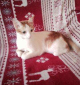 Котенок ласковый,нежнейшее создание