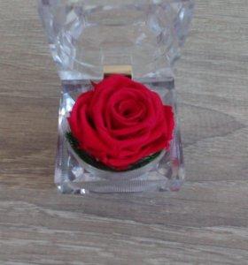 Цветы в стекле: Композиция из натуральной розы