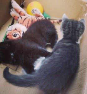Отдадим котят в добрые и надежные руки