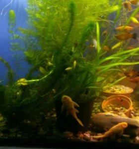 Распродажа аквариумных рыб