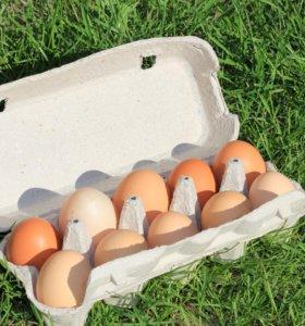 Домашние деревенские куриные яйца😊