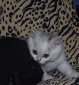 Продаётся очаровательный котенок.