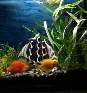 Аквариум 27л с рыбками и всем  содержимым