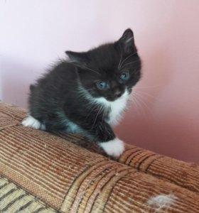 Маленький котенок малыш ждет дом.