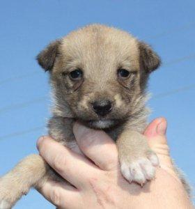 щенок девочка в добрые руки