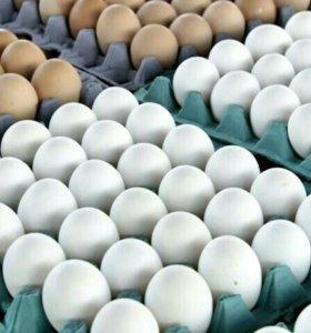Яйцо домашнее,курочка домашняя.