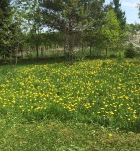 Покос травы. Стрижка газонов. Расчистка участков
