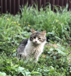 Котик (ищет дом)