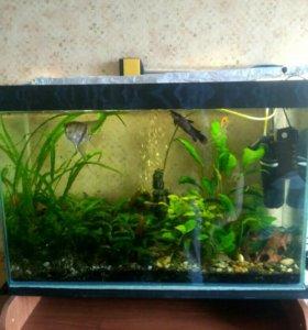 Аквариум с рыбками и сопутствующими предметами.
