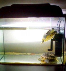 аквариумом на 60л. Фильтр +2 черепахи