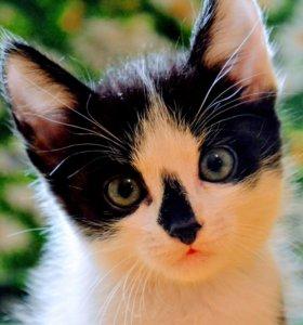 Котята необычного далматинского окраса ищут хозяев
