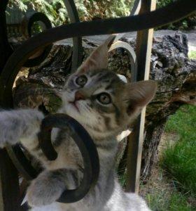 Котенок-котик