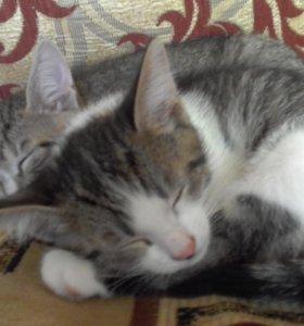2 котика