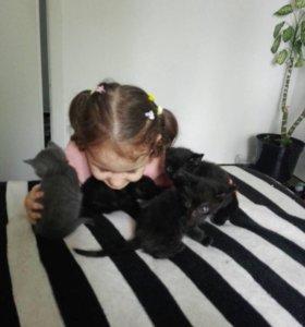 Котята чёрные
