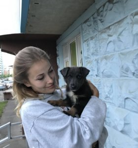 Щеночек (девочка) ищет дом!🏠