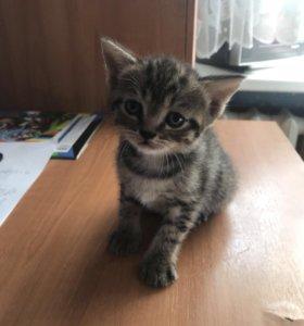 Котёнок, мальчик