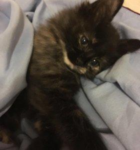Котёночка в дар