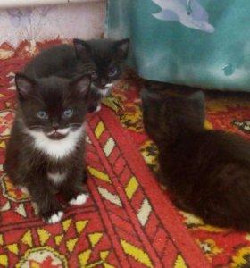 Котята 2,5 месяца