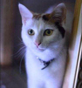 Котёнок Ника