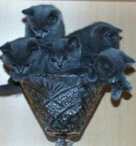 Отдам котят в добрве руки, 3 кота, 1 кошка