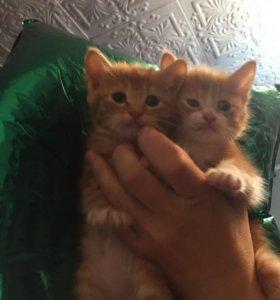 2 котёнка-мальчика