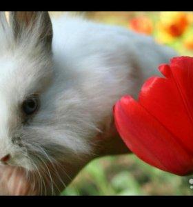 Белый мини кролик,привит