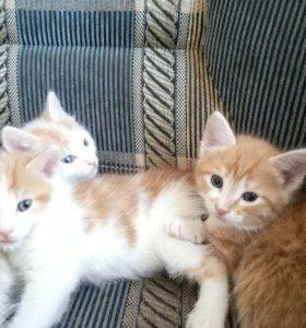 Котята 2 мальчика 1 девочка в добрые руки