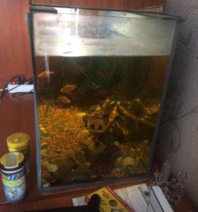 Аквариум + рыбки в подарок и всё оборудований