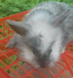 Декоративные крольчатки
