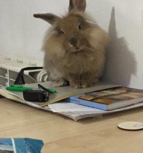 Кролик декоративный ,очень красивый )