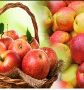 Собираю яблоки