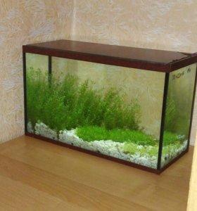 Аквариум 14л со светильником, рыбками и растениями